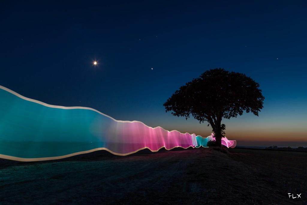 L'arbre carafe